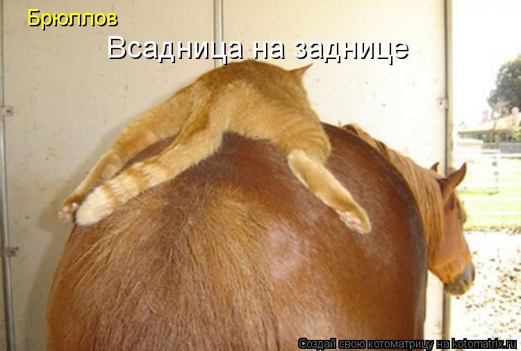 Котоматрица: Брюллов Всадница на заднице