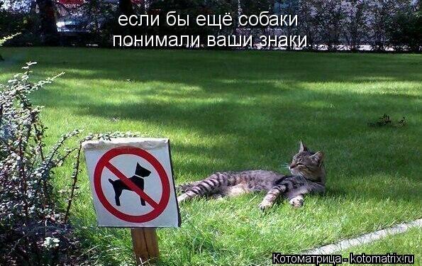 Котоматрица: если бы ещё собаки понимали ваши знаки...