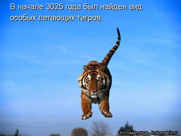 Котоматрица: В начале 3025 года был найден вид  особых летающих тигров.