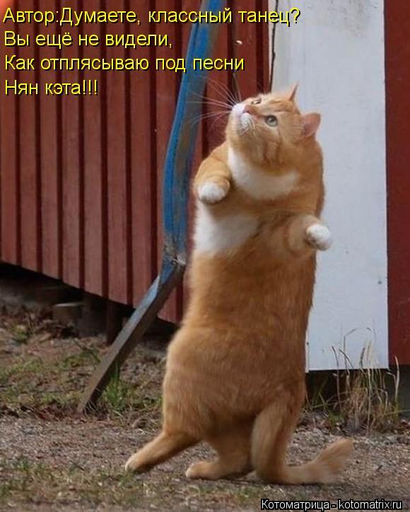 Котоматрица: Автор:Думаете, классный танец? Вы ещё не видели, Как отплясываю под песни Нян кэта!!!