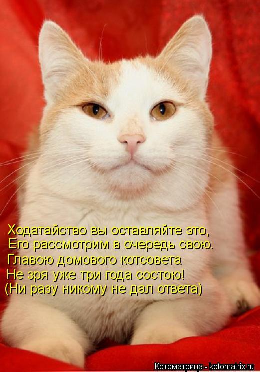 Котоматрица: Ходатайство вы оставляйте это, Его рассмотрим в очередь свою. Главою домового котсовета Не зря уже три года состою! (Ни разу никому не дал от
