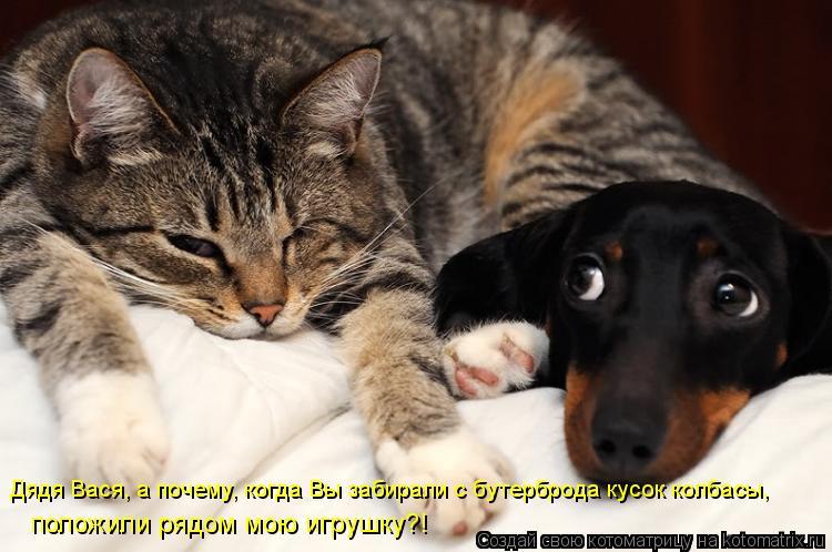 Котоматрица: Дядя Вася, а почему, когда Вы забирали с бутерброда кусок колбасы, положили рядом мою игрушку?!