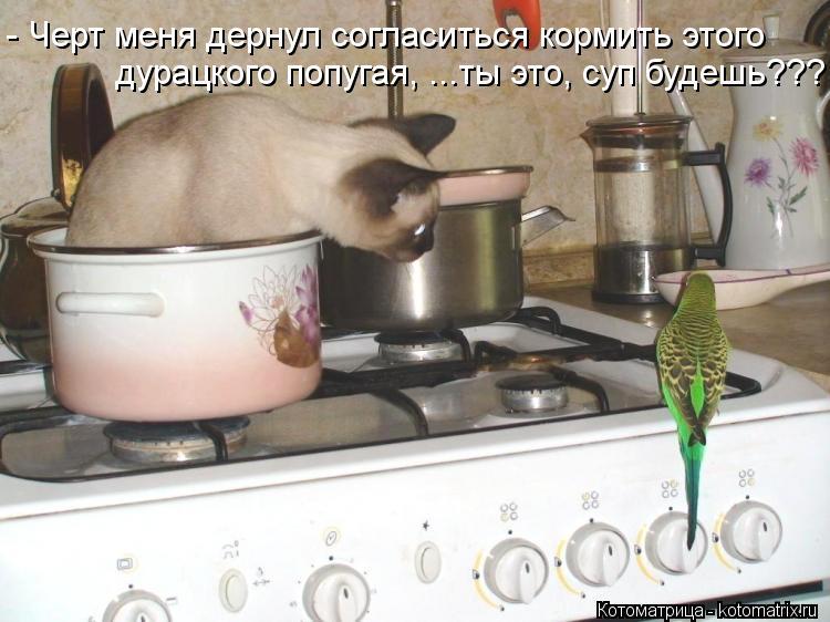 Котоматрица: - Черт меня дернул согласиться кормить этого дурацкого попугая, ...ты это, суп будешь???