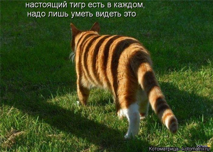 Котоматрица: надо лишь уметь видеть это   настоящий тигр есть в каждом,