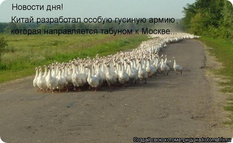 Котоматрица: Новости дня!  Китай разработал особую гусиную армию , которая направляется табуном к Москве...
