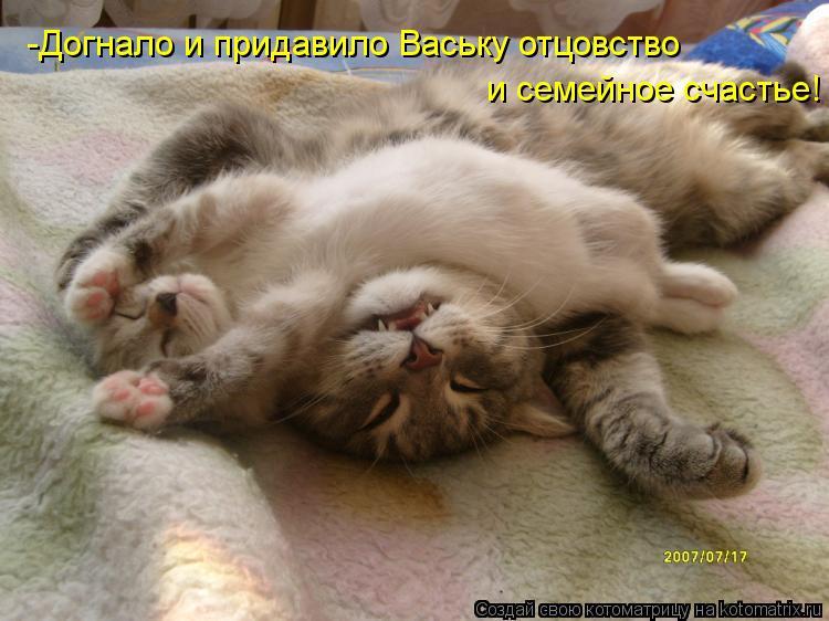 Котоматрица: -Догнало и придавило Ваську отцовство и семейное счастье!