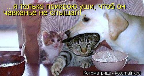 Котоматрица: ...я только прикрою уши, чтоб он  чавканье не слышал!..