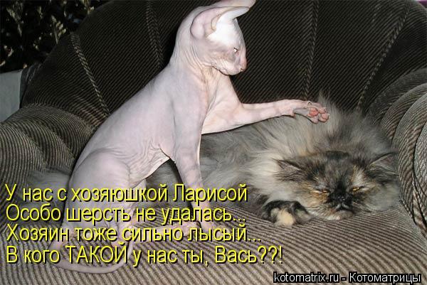 Котоматрица: У нас с хозяюшкой Ларисой Особо шерсть не удалась... Хозяин тоже сильно лысый... В кого ТАКОЙ у нас ты, Вась??!