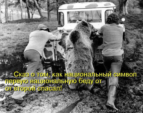 Котоматрица: Сказ о том, как национальный символ  первую национальную беду от  от второй спасал!