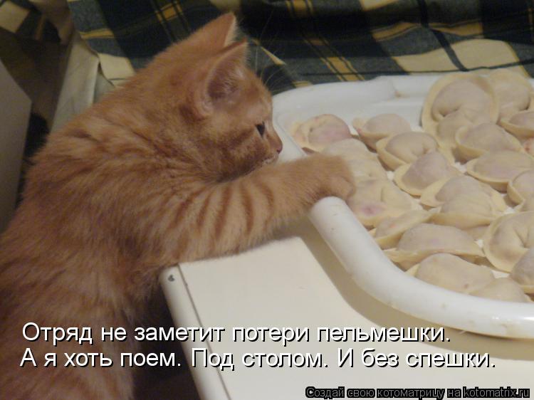 Котоматрица: А я хоть поем. Под столом. И без спешки. Отряд не заметит потери пельмешки.