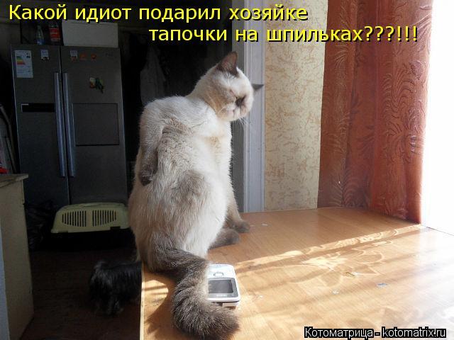 Котоматрица: Какой идиот подарил хозяйке тапочки на шпильках???!!!