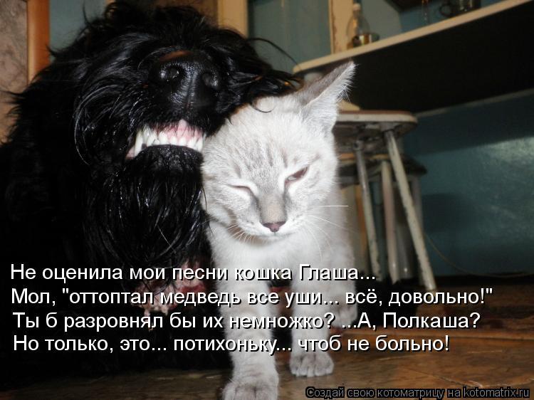 """Котоматрица: Не оценила мои песни кошка Глаша... Мол, """"оттоптал медведь все уши... всё, довольно!"""" Ты б разровнял бы их немножко? ...А, Полкаша?  Но только, это..."""