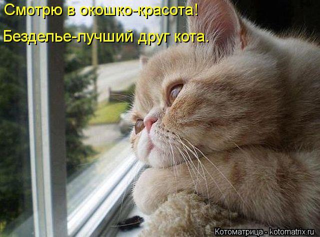 Котоматрица: Смотрю в окошко-красота! Безделье-лучший друг кота.