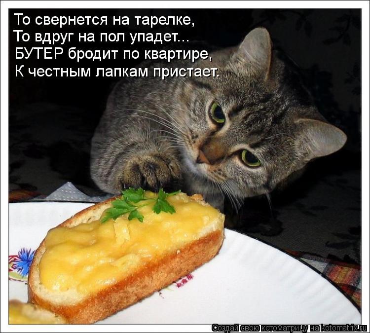 Котоматрица: То свернется на тарелке, То вдруг на пол упадет... БУТЕР бродит по квартире, К честным лапкам пристает.
