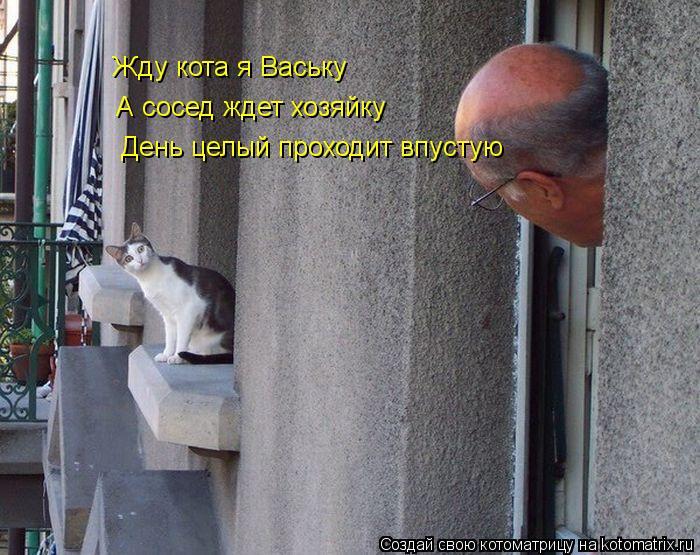 Котоматрица: Жду кота я Ваську А сосед ждет хозяйку День целый проходит впустую