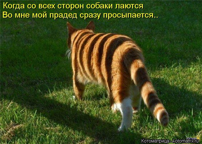 Котоматрица: Когда со всех сторон собаки лаются Во мне мой прадед сразу просыпается..