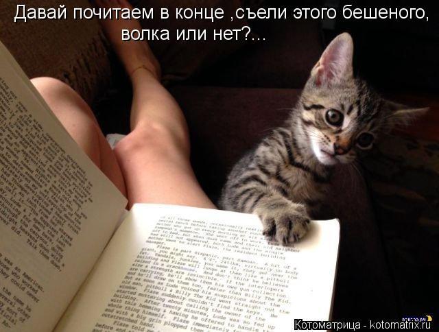 Котоматрица: Давай почитаем в конце ,съели этого бешеного, волка или нет?...