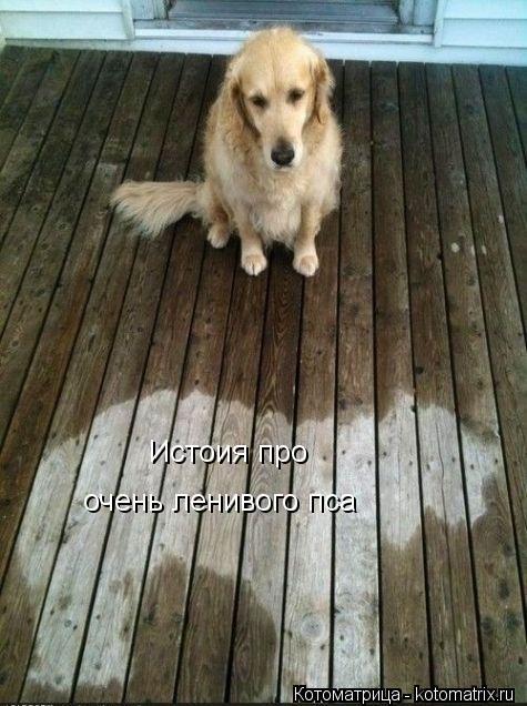 Котоматрица: Истоия про очень ленивого пса