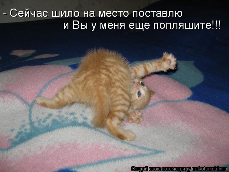 Котоматрица: - Сейчас шило на место поставлю и Вы у меня еще попляшите!!!