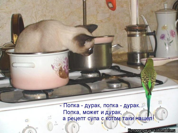 Котоматрица: - Попка - дурак, попка - дурак... Попка, может и дурак,  а рецепт супа с котом таки нашел!