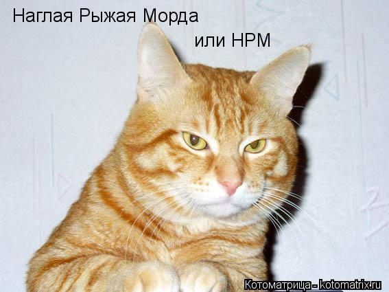 http://kotomatrix.ru/images/lolz/2013/06/17/kotomatritsa_e.jpg