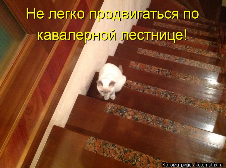 Котоматрица: Не легко продвигаться по  кавалерной лестнице!