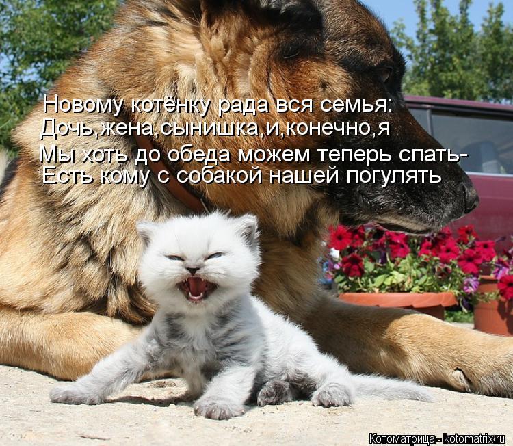 Котоматрица: Новому котёнку рада вся семья: Дочь,жена,сынишка,и,конечно,я Мы хоть до обеда можем теперь спать- Есть кому с собакой нашей погулять