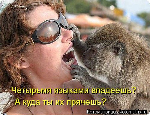 Котоматрица: Четырьмя языками владеешь? А куда ты их прячешь?