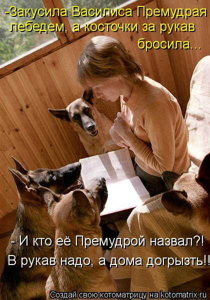 Котоматрица: -Закусила Василиса Премудрая  лебедем, а косточки за рукав бросила... - И кто её Премудрой назвал?! В рукав надо, а дома догрызть!!