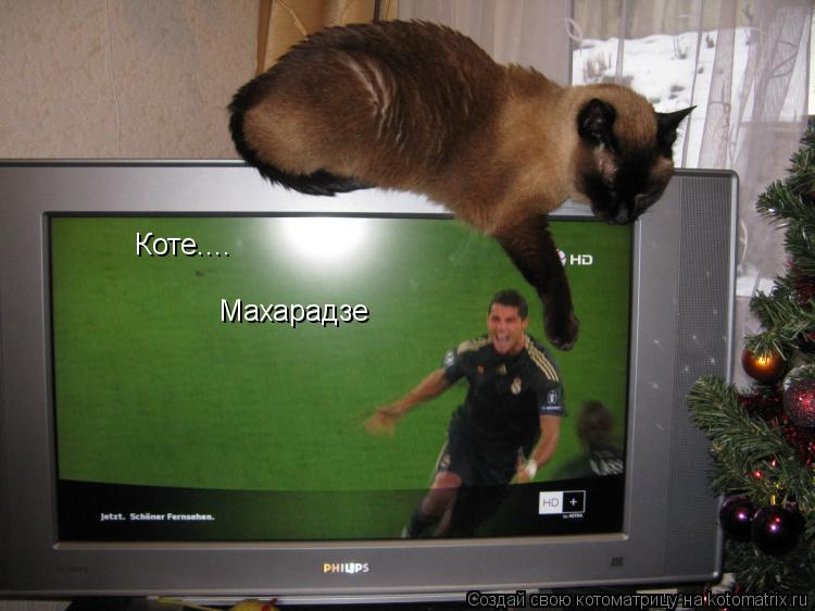 Котоматрица: Коте.... Махарадзе