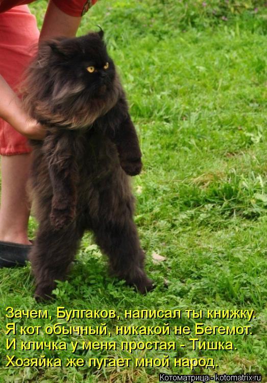 Котоматрица: Зачем, Булгаков, написал ты книжку. Я кот обычный, никакой не Бегемот. И кличка у меня простая - Тишка. Хозяйка же пугает мной народ.