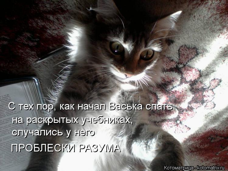 Котоматрица: С тех пор, как начал Васька спать  на раскрытых учебниках, случались у него ПРОБЛЕСКИ РАЗУМА