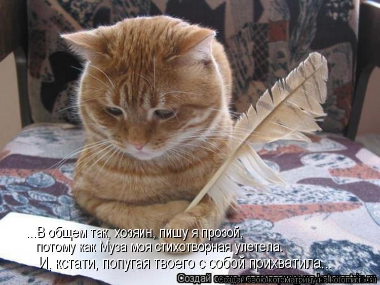 Котоматрица: ...В общем так, хозяин, пишу я прозой, потому как Муза моя стихотворная улетела. И, кстати, попугая твоего с собой прихватила...