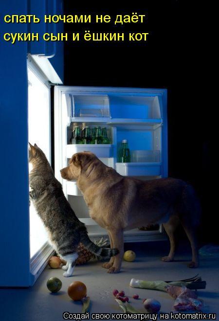 Котоматрица: спать ночами не даёт сукин сын и ёшкин кот