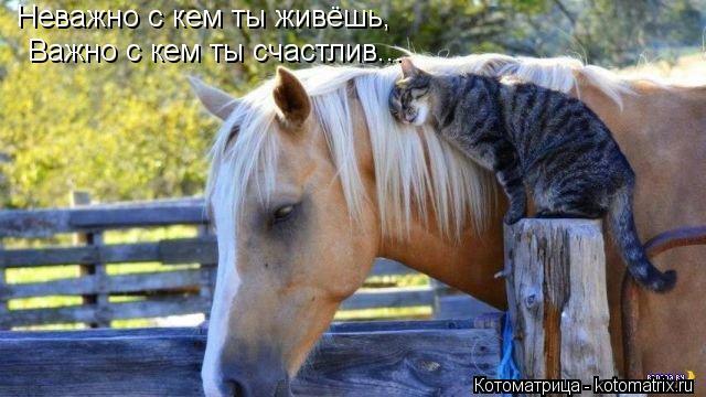 Котоматрица: Неважно с кем ты живёшь, Важно с кем ты счастлив...