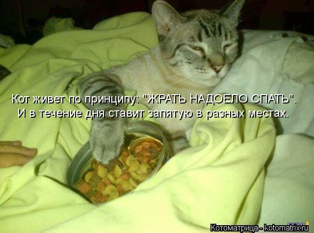 """Котоматрица: Кот живет по принципу: """"ЖРАТЬ НАДОЕЛО СПАТЬ"""". И в течение дня ставит запятую в разных местах."""