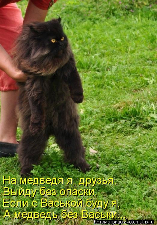 Котоматрица: На медведя я, друзья, Выйду без опаски, Если с Васькой буду я, А медведь без Васьки...