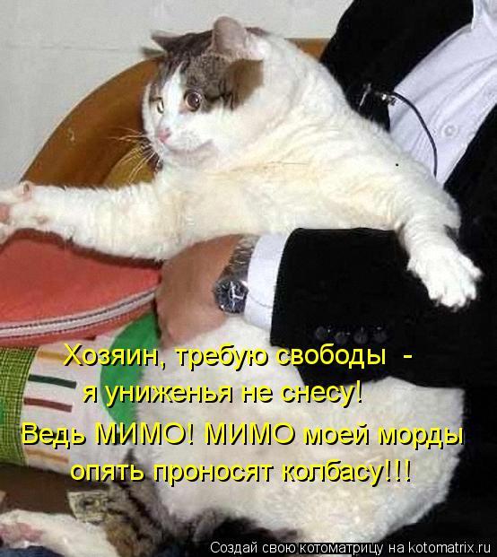 Котоматрица: Хозяин, требую свободы  - я униженья не снесу! Ведь МИМО! МИМО моей морды опять проносят колбасу!!!