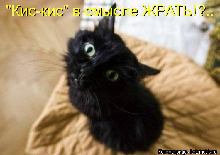"""Котоматрица: """"Кис-кис"""" в смысле ЖРАТЬ!?.."""