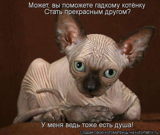 Котоматрица: Может, вы поможете гадкому котёнку Стать прекрасным другом? У меня ведь тоже есть душа!