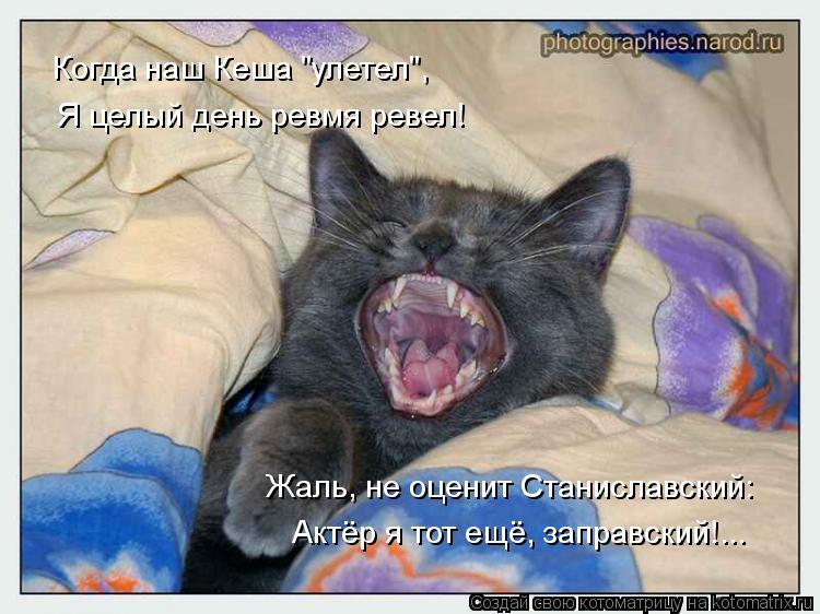 """Котоматрица: Когда наш Кеша """"улетел"""", Я целый день ревмя ревел! Жаль, не оценит Станиславский: Актёр я тот ещё, заправский!..."""