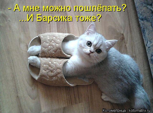Котоматрица: - А мне можно пошлёпать? ...И Барсика тоже?