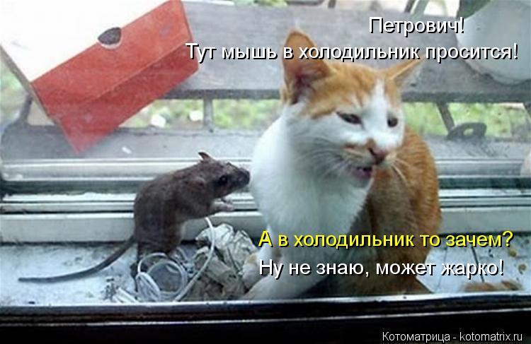 Котоматрица: Петрович! Тут мышь в холодильник просится! А в холодильник то зачем? Ну не знаю, может жарко!