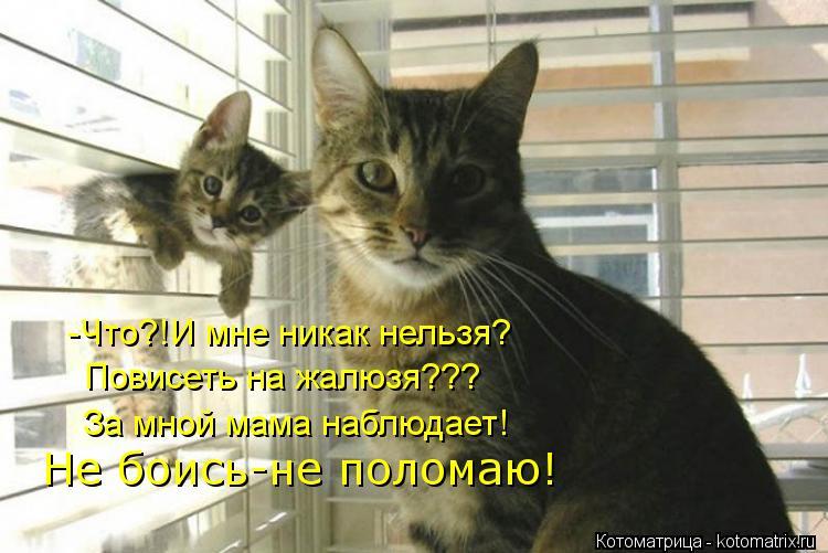 Котоматрица: -Что?!И мне никак нельзя? Повисеть на жалюзя??? За мной мама наблюдает! Не боись-не поломаю!