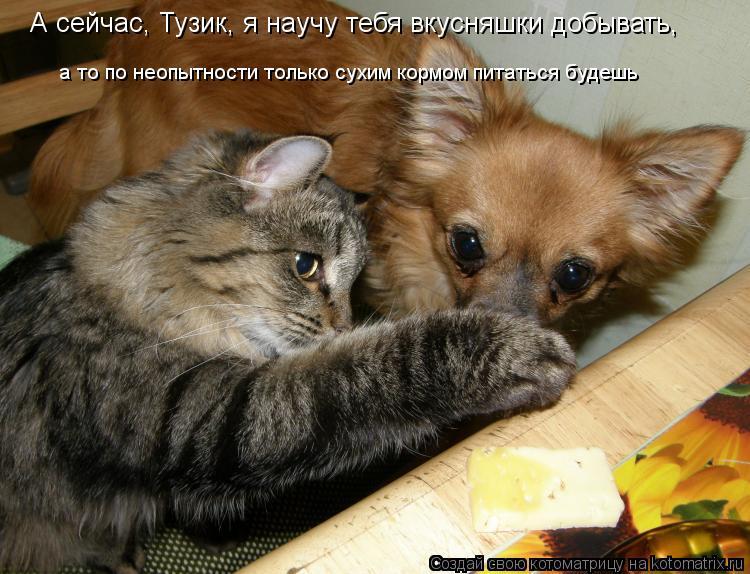 Котоматрица: А сейчас, Тузик, я научу тебя вкусняшки добывать,   а то по неопытности только сухим кормом питаться будешь