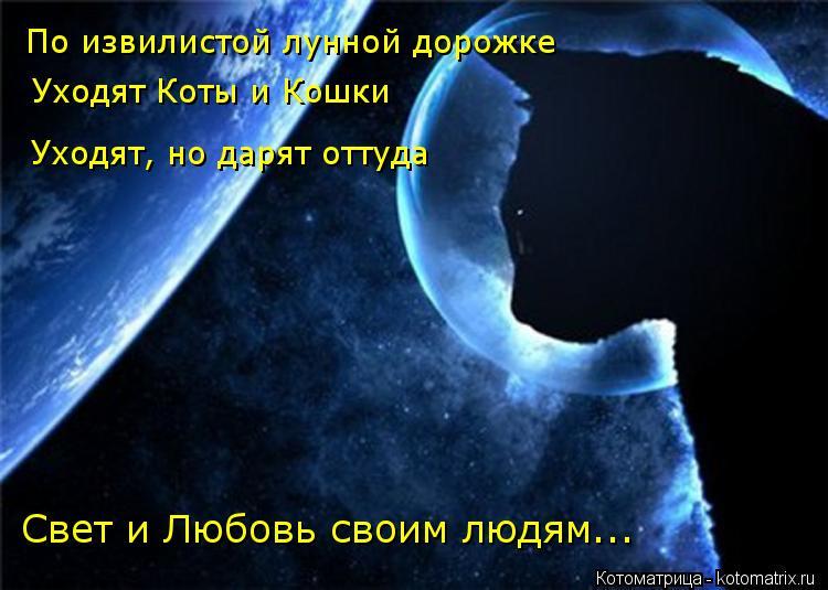 Котоматрица: По извилистой лунной дорожке Уходят Коты и Кошки Уходят, но дарят оттуда Свет и Любовь своим людям...