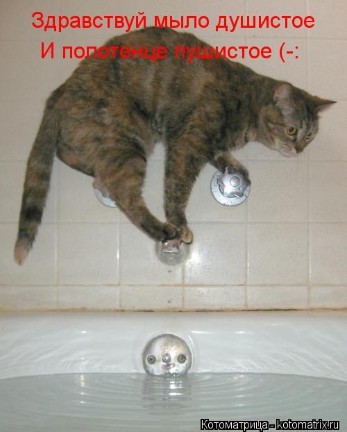 Котоматрица: Здравствуй мыло душистое И полотенце пушистое (-: