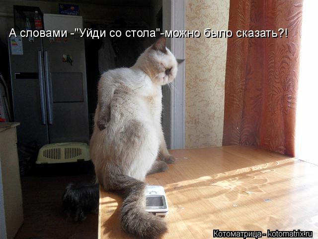 """Котоматрица: А словами -""""Уйди со стола""""-можно было сказать?!"""