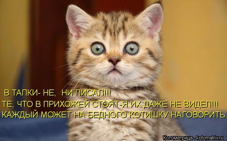 Котоматрица: В ТАПКИ- НЕ,  НИ ПИСАЛ!!! ТЕ, ЧТО В ПРИХОЖЕЙ СТОЯТ-Я ИХ ДАЖЕ НЕ ВИДЕЛ!!! КАЖДЫЙ МОЖЕТ НА БЕДНОГО КОТИШКУ НАГОВОРИТЬ...