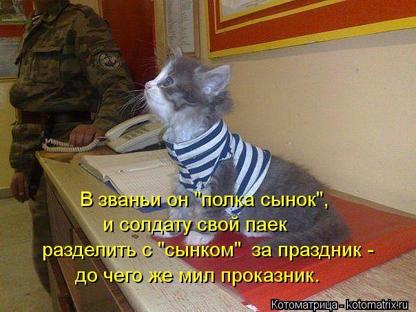 """Котоматрица: В званьи он """"полка сынок"""", и солдату свой паек до чего же мил проказник. разделить с """"сынком""""  за праздник -"""